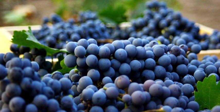 30 августа - празднуем день Каберне Совиньон, -15% на вина из этого сорта