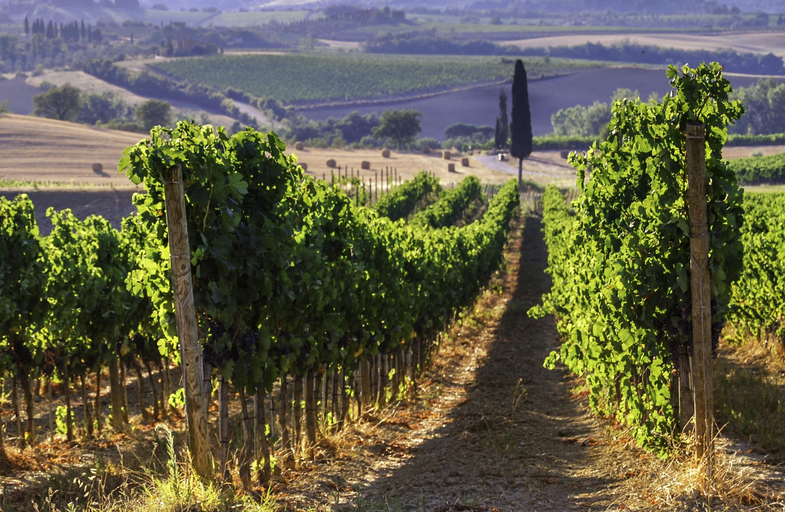 С 19 по 22 сентября  - дни итальянских вин в Винотеке Classico.